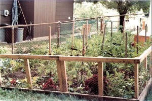 Urban Organic Garden