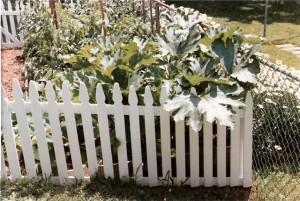 Picture of Organic Squash